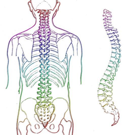 A_spine 257870_960_720
